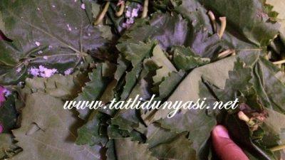 Yaprak Salamurası